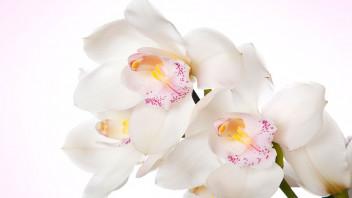 Flowers - Memorial Planning