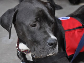 Freedom Service Dogs - Yappy Hour
